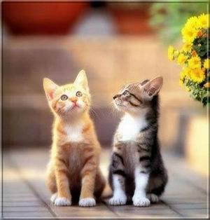 Vajon mit néz cica tesó? Gondolja magában barátja, Cirmi.