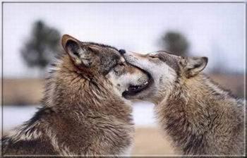 Kép: Barátság 103 képeslap.
