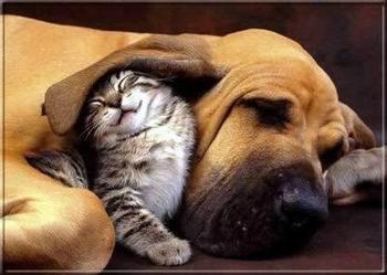 Kép: Barátság 106 képeslap.
