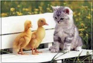 Kép: Barátság 109 képeslap.