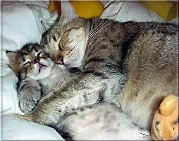 Kép: Barátság 110 képeslap.