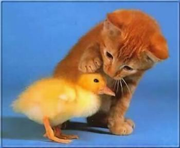 Kép: Barátság 280 képeslap.