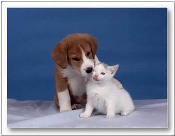 Kép: Barátság 282 képeslap.