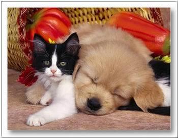 Kép: Barátság 283 képeslap.