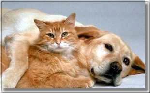 Kép: Barátság 660 képeslap.