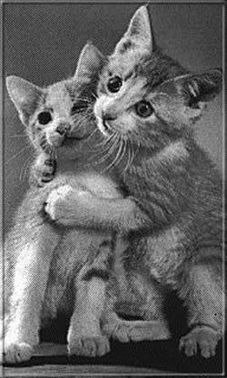 Kép: Cicák 270 képeslap.