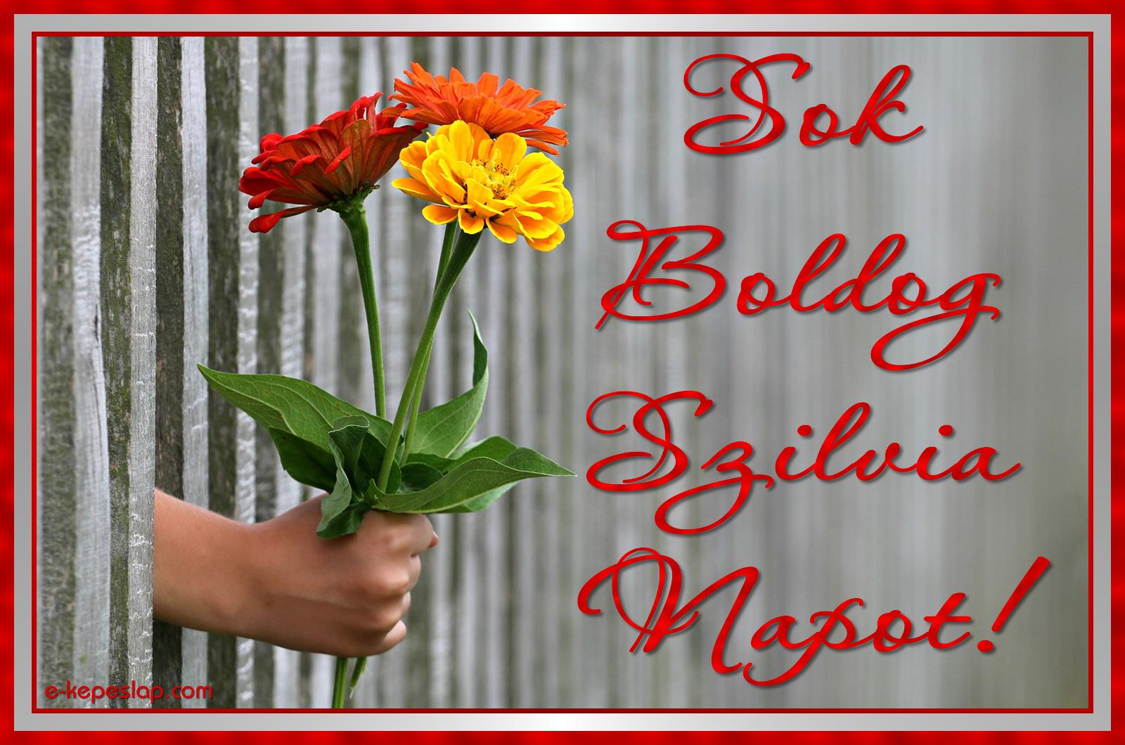 szilvia napi köszöntő Képeslap Szilvia névnapra   Képeslapküldés   e kepeslap.com szilvia napi köszöntő