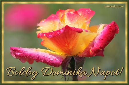 Dominika névnapi képeslap