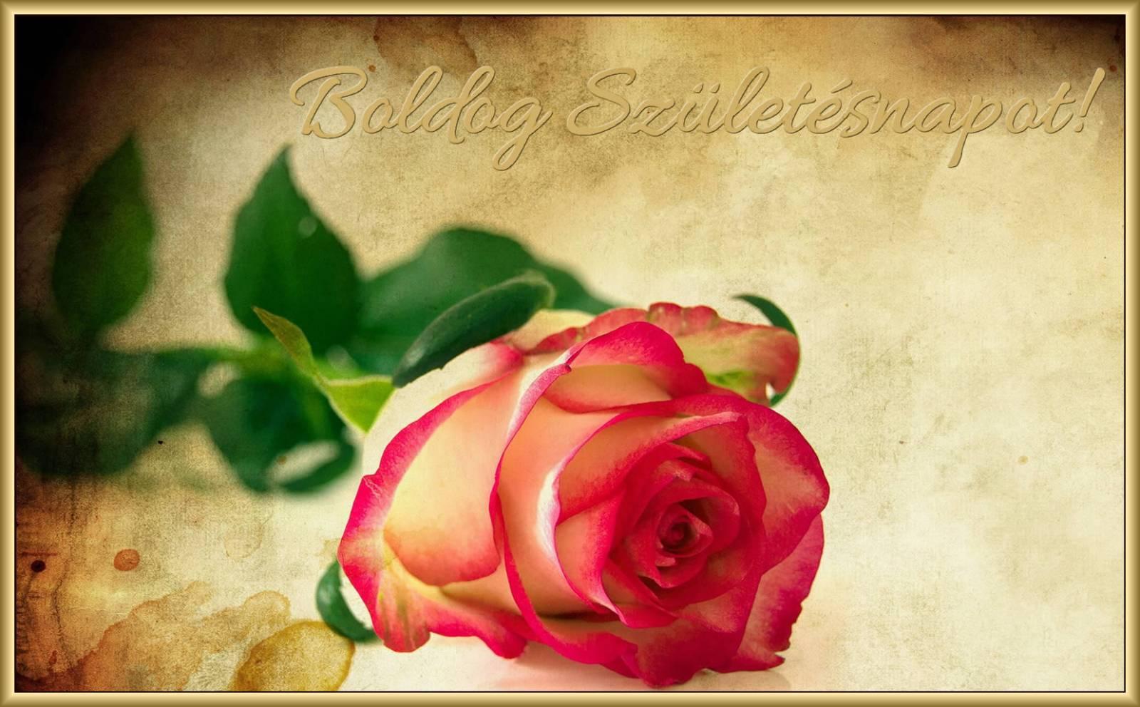 születésnapi rózsás képek Boldog születésnapot rózsával   Képeslapküldés   e kepeslap.com születésnapi rózsás képek