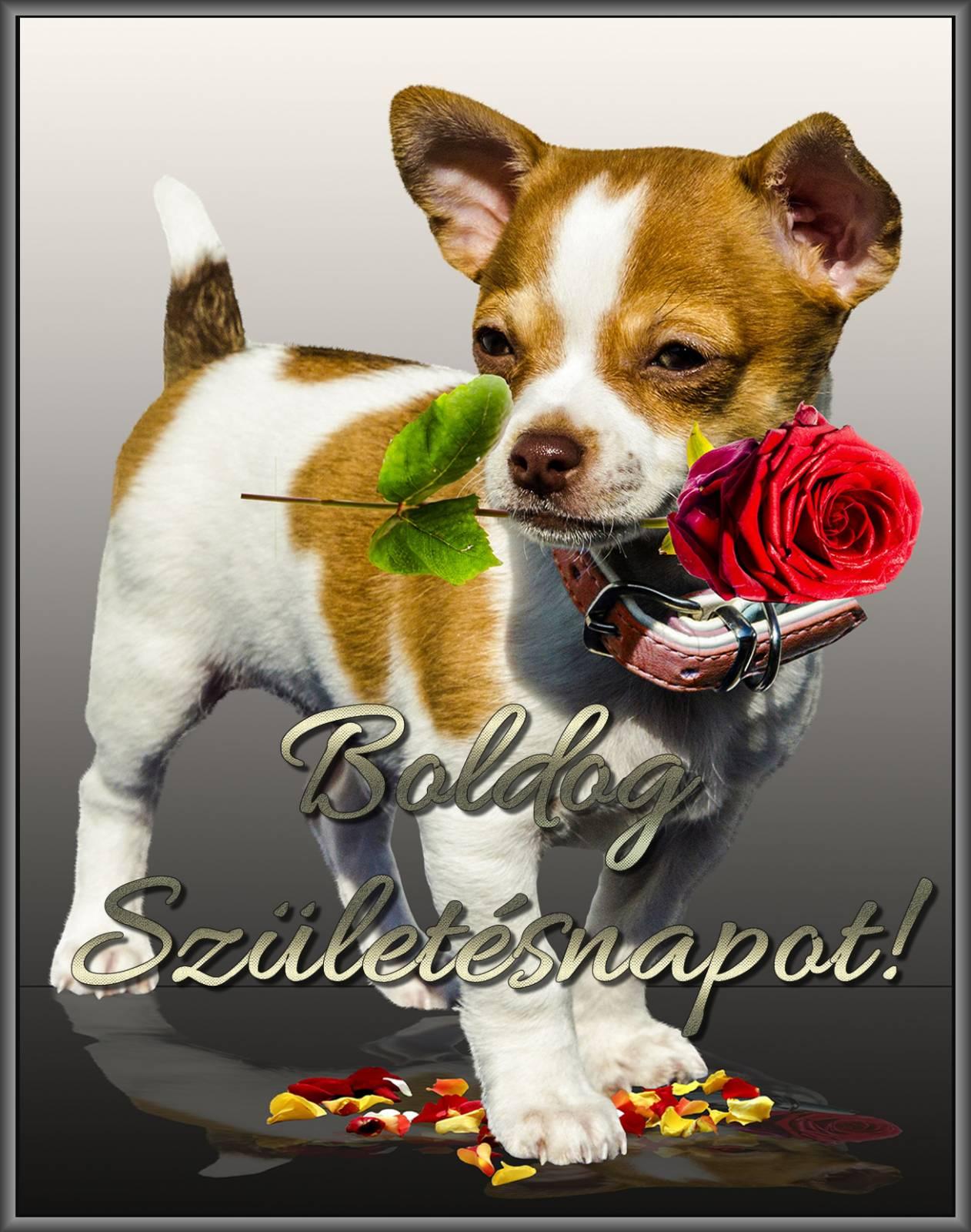 születésnapi képeslapok letöltése Kutya virággal, szülinapi kép   Képeslapküldés   e kepeslap.com születésnapi képeslapok letöltése