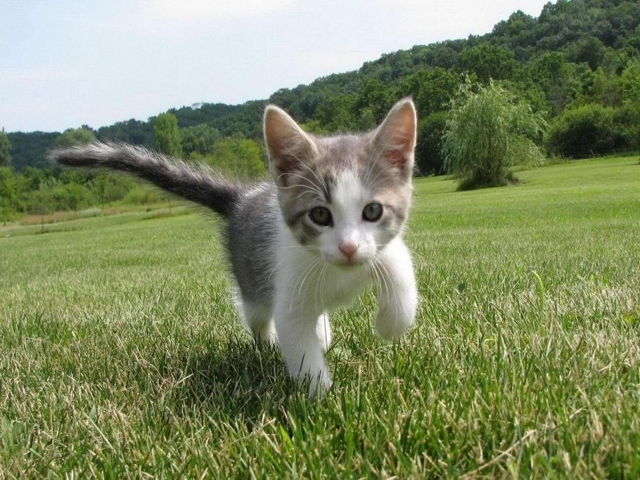 Cica, macska képe...