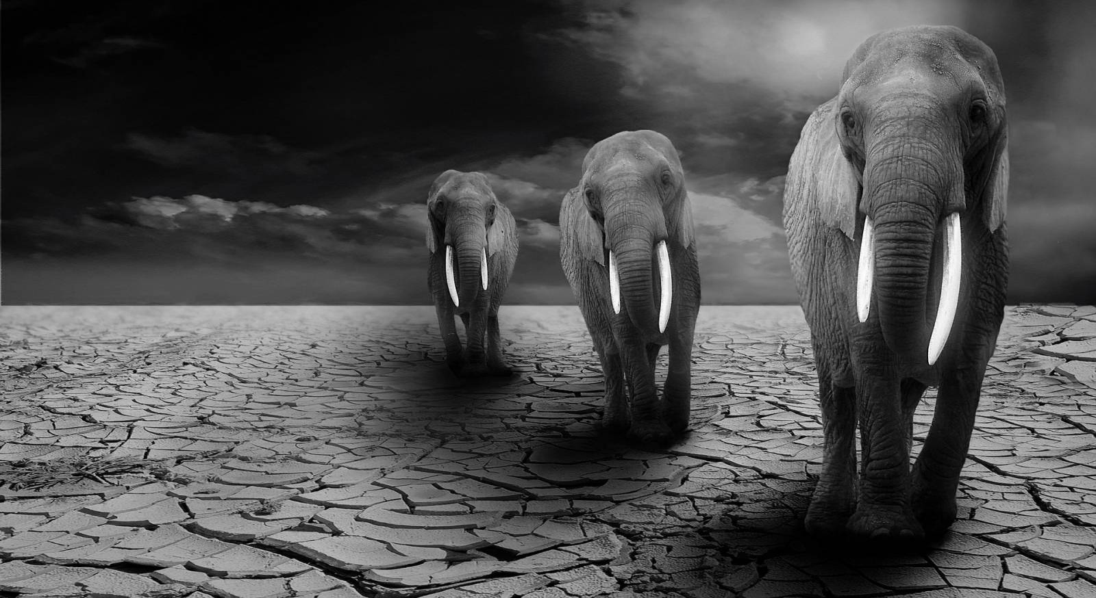 Elefántok 7091bff6fc