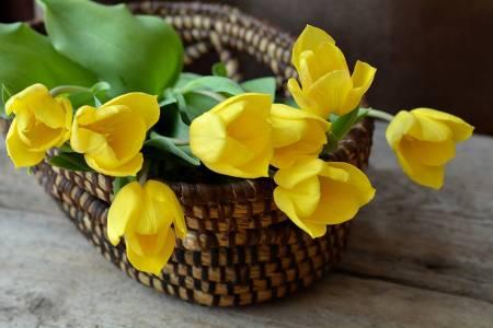 Virágkosár sárga tulipánokal