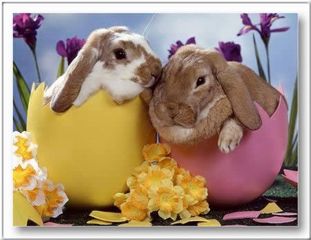 Képeslapküldés: Húsvét 370 képeslap.