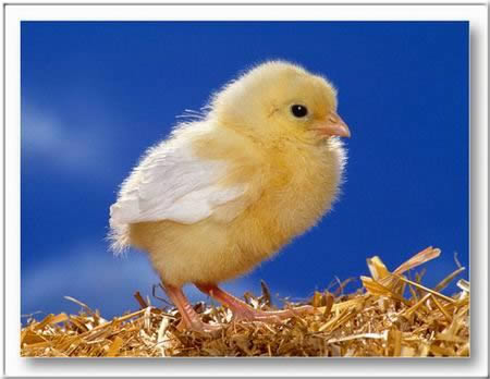 Képeslapküldés: Húsvét 373 képeslap.