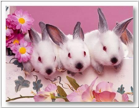 Kép: Húsvét 375 képeslap.