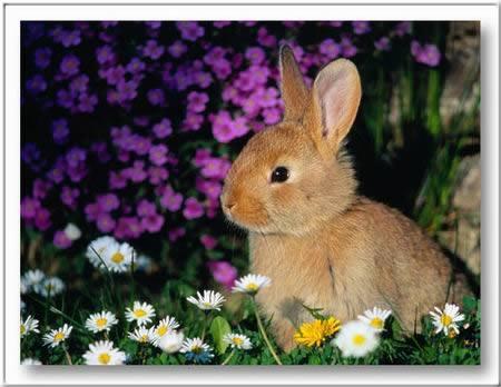 Kép: Húsvét 376 képeslap.