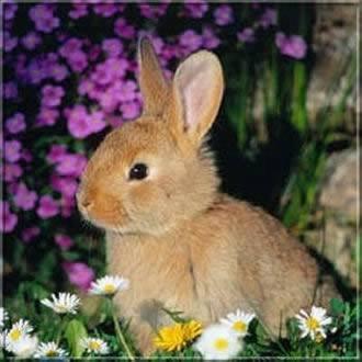 Kép: Húsvét 380 képeslap.