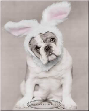 Kép: Húsvét 381 képeslap.