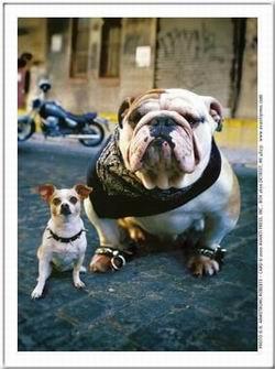 Kép: Kutyák 246 képeslap.