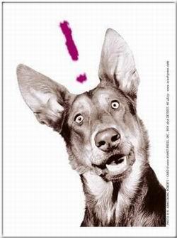 Kép: Kutyák 247 képeslap.