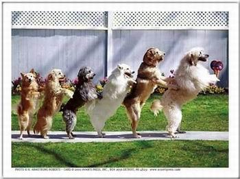 Kép: Kutyák 250 képeslap.