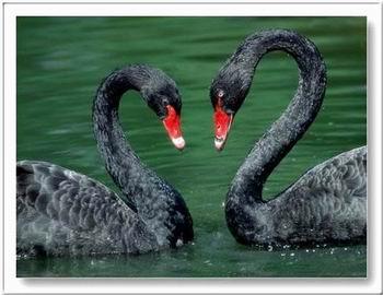 Kép: Szerelem 411 képeslap.