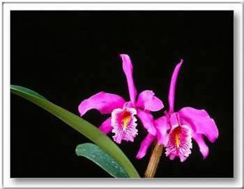 Kép: Virágok 148 képeslap.