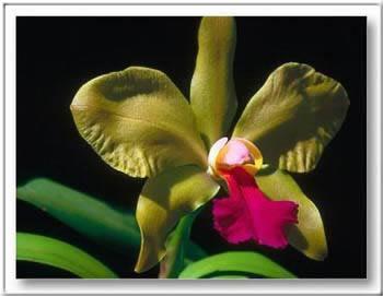 Kép: Virágok 153 képeslap.