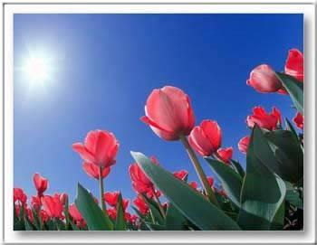 Kép: Virágok 163 képeslap.