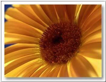 Kép: Virágok 162 képeslap.