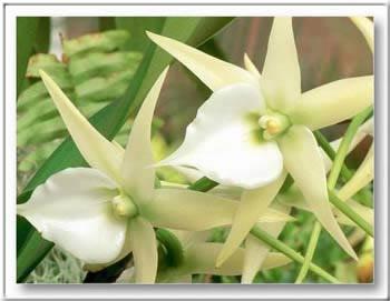 Kép: Virágok 288 képeslap.