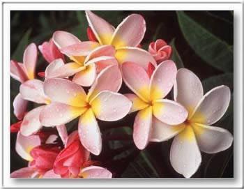 Kép: Virágok 293 képeslap.