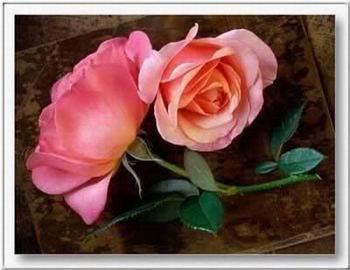 Kép: Virágok 316 képeslap.