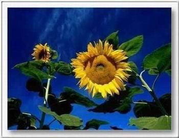 Kép: Virágok 315 képeslap.
