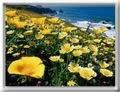 Képeslapküldés: Virágok 1712 képeslap.
