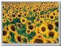 Képeslapküldés: Virágok 1713 képeslap.