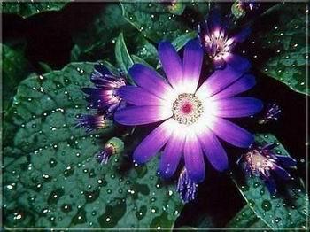 Harmatos virág képeslap.